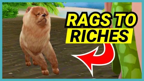 Why is there a dog in my game?! - 🌴 Rags to Riches (Part 9)